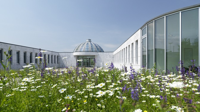 Flowery meadow with the cupola of the Executive Campus in the background, University of St.Gallen (HSG)